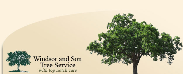 Tree Services Central Florida