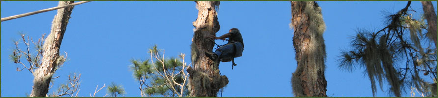 Tree Removals for Central Florida